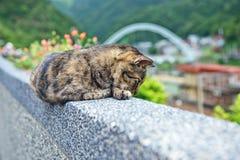 在侯硐猫村庄,瑞芳区,新的台北的布朗猫 库存图片