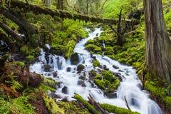 在俄勒冈森林远足足迹的小瀑布瀑布 免版税库存照片