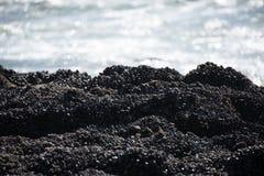 在俄勒冈海岸的浪潮水池 免版税库存图片