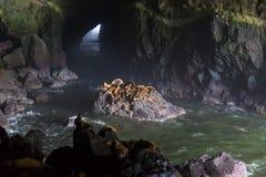 在俄勒冈海岸的海狮洞 免版税库存照片