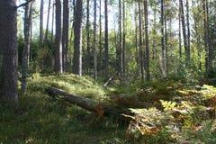 在俄国森林附近的茶,在成功的渔以后 库存图片