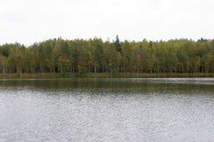 在俄国森林附近的茶,在成功的渔以后 免版税库存图片
