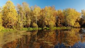 在俄国秋天风景上的上升与桦树和池塘 股票录像