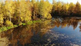 在俄国秋天风景上的上升与桦树和池塘 股票视频
