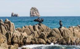 在俄国远东海鸟鸬鹚的Gamov半岛 免版税库存图片