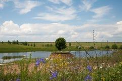 在俄国,美丽的树的自然夏天 免版税图库摄影
