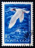 在俄罗斯打印的邮票显示黑带头的鸥,系列动物,大约1972年 库存图片