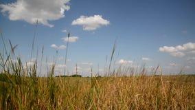 在俄罗斯的中央部分的干草原草 影视素材