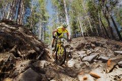 在俄罗斯的冠军期间登山车的,男性骑自行车者通过在自行车的岩石下降 库存照片