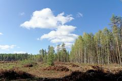 在俄罗斯的欧洲部分的砍伐 免版税库存图片