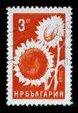 在保加利亚打印的邮票显示向日葵 图库摄影