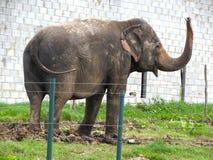 在保护储备的大象 图库摄影