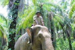 在保护应答者单位东部的亚齐的Sumateta大象 免版税库存照片
