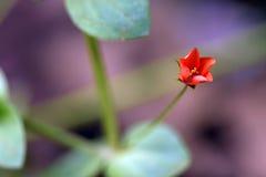 在保持记录的微小和惊人的花雨林 图库摄影