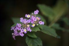 在保持记录的微小和惊人的花雨林 库存图片