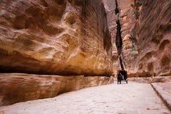 在信号谷, Petra,约旦的马推车 免版税库存照片