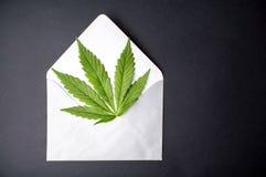 在信封的大麻叶子 库存照片