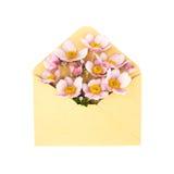 在信封的花,隔绝在白色 免版税库存图片