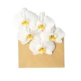 在信封的花,隔绝在白色 库存图片