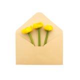 在信封的花 免版税库存照片