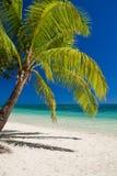 在俯视热带盐水湖的海滩的棕榈树 库存图片