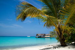 在俯视热带盐水湖的海滩的棕榈树 免版税库存图片