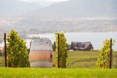 在俯视Okaganan湖的葡萄园的葡萄酒桶 免版税图库摄影