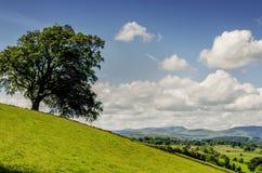 在倾斜的孤立树 免版税库存图片
