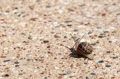在倾斜的蜗牛 库存图片