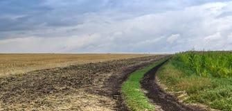 在倾斜的黄色麦子的领域和绿色玉米田之间的乡下公路蓝色多云天空的背景的 免版税库存照片