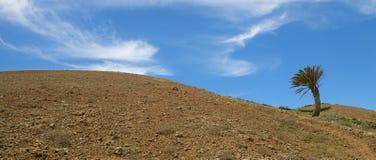 在倾斜02的兰萨罗特岛棕榈 免版税库存图片