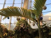 在假日装饰的热带树,跳舞飞过蝴蝶议院,强的博物馆,罗切斯特,纽约, 2017年 图库摄影