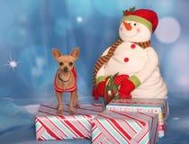 在假日画象的微笑的奇瓦瓦狗 库存照片