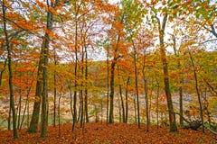 在偏僻的里奇的秋天颜色 库存图片