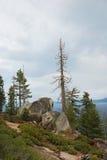 在停止的Tahoe湖结构树之上 免版税库存照片
