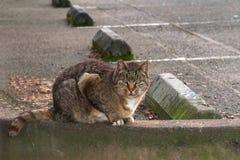 在停车场的离群猫 免版税库存图片