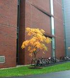 在停车结构树附近 库存图片