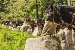 在停顿的哺养的马 免版税图库摄影