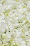 在健康温泉的白色兰花 库存图片
