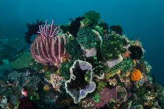 在健康礁石的五颜六色的海洋无脊椎在印度尼西亚 库存图片