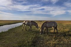 在储备的动物在干草原的牧场地 免版税库存照片