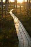 在储备的森林足迹 库存照片