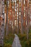 在储备的森林足迹 库存图片