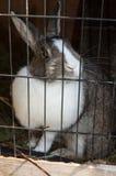在储藏箱的兔子 免版税库存图片