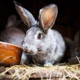 在储藏箱的幼小兔子 免版税库存图片