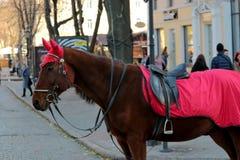 在傲德萨的街道上的马  库存照片