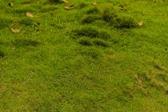 在儿童的游乐场上兴旺的绿草 库存照片