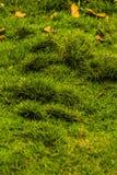 在儿童的游乐场上兴旺的绿草 免版税图库摄影