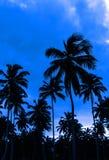 在充分一个加勒比海滩的浪漫蓝色日落  免版税库存图片