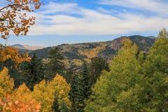 在充分山坡的秋天颜色白杨木 免版税库存照片